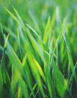 草丛图片大全 绿油油的草丛让人看了超级舒服