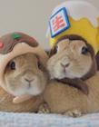 微信可爱兔子头像图片 萌萌哒小兔兔真是讨人喜欢