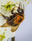 蜜蜂养殖的基本知识 蜜蜂养殖要注意哪些
