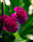 漂亮的鲜花图片大全集 最漂亮的鲜花图片大全