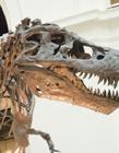 恐龙化石图片 恐龙化石图片大全