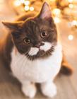 大胡子猫图片 网友:这样的喵星人很惹人爱