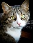 猫咪眼睛特写 猫猫照片