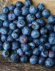 �{莓照片大�D �{莓是什么季�的水果 �{莓的功效�c作用