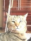 猫咪丑照大赛 喵星人丑照大赛