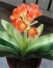 家里适合养什么花 室内适合养什么花 什么花适合在室内养