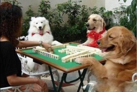 【牌瘾犯了】狗狗卖萌动物搞怪图片