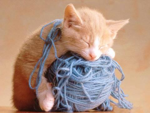 超爱睡觉的动物搞笑图片