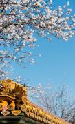 故宫御花园超美鲜花风景图