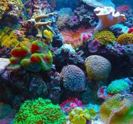 海底的彩色珊瑚礁图片