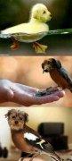 动物换身体恶搞ps图片