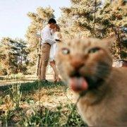 猫拒绝合照吐舌头搞笑图片