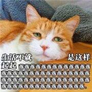 猫动物搞笑带字图片