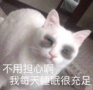 熬夜猫搞笑带字表情包图