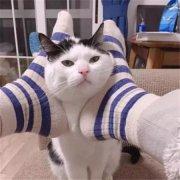 猫可爱动物表情包微信头像图