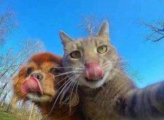 猫狗动物合照自拍可爱图片大全合集
