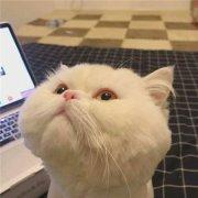 猫动物可爱微信头像表情包图片
