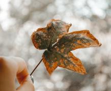 泛黄的树叶植物特写高清图片