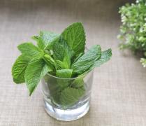 绿色植物薄荷叶子高清图片