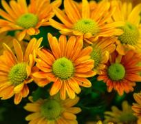 绽放的花朵特写植物高清图片