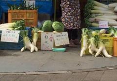 �}卜形�罟之�蔬菜�焊�D片