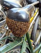 自行车马蜂窝搞笑吓人图片