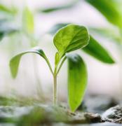 清新的绿芽小草植物高清图片