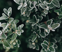 冰冻的树叶和树枝植物高清特写图片