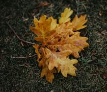 黄色的落叶植物特写高清图片
