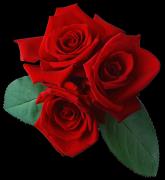 玫瑰花植物透明背景PNG素材高清图片