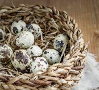 新鲜鹌鹑蛋美食高清图片