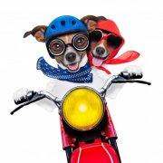 充满创意的宠物狗狗摆拍高清图片