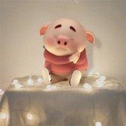 卡通可爱猪动物微信头像大全