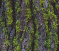 树木苔藓植物高清图片