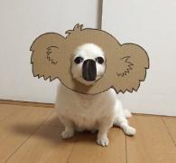 狗动物萌宠硬纸壳cos图片大全
