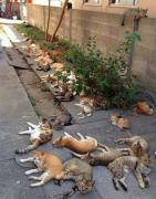 猫吃猫薄荷动物打滚照片大全