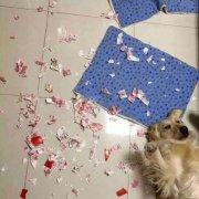 狗动物拆家撕人民币搞笑图片