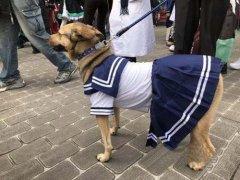 狗动物穿衣服cos水手服搞笑图片