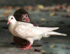 ��子猴子�游镄愣��剀�D片