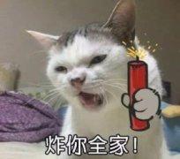 猫生气骂人动物搞笑带文字表情包