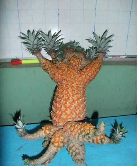 奇葩形状的菠萝图