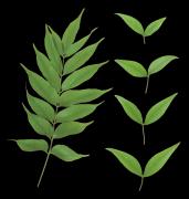 透明的叶子背景PNG图片