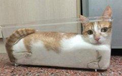 液体猫的搞笑图