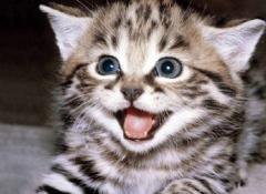 动物笑容的图片