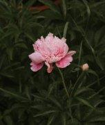 ��水珠的花朵特���D片