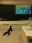 猫看电视的图片
