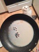 猫咪闯祸的搞笑图