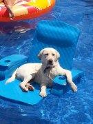可爱搞笑的狗狗图片