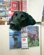 狗狗上班的搞笑图片