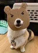 可爱的小狗狗生气凶人表情包